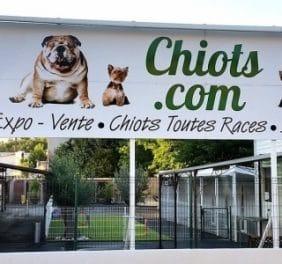 Chiots.com