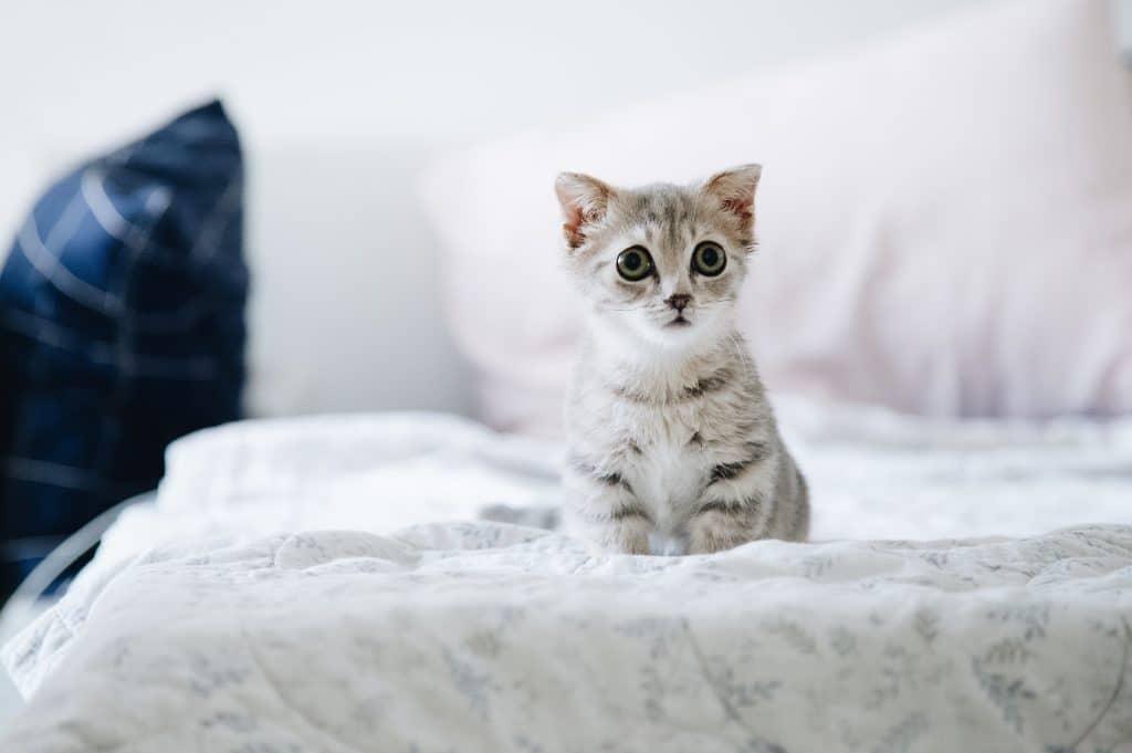 concours de chats